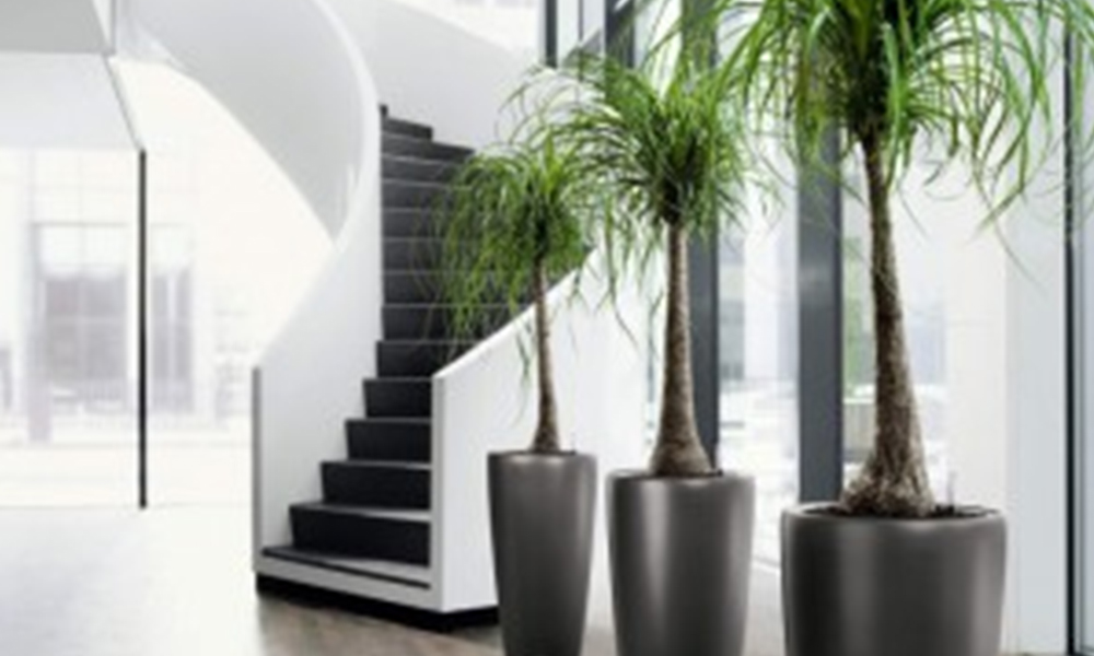 Stylish Indoor Plants available on Hire in Melbourne
