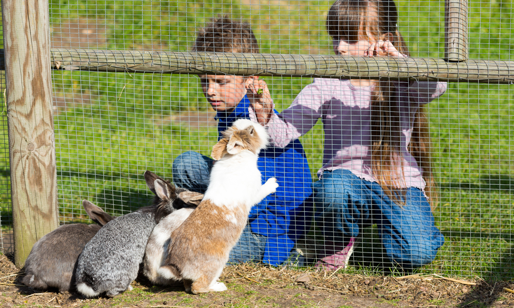 Pets and Fencing Must Go Together in Adelaide