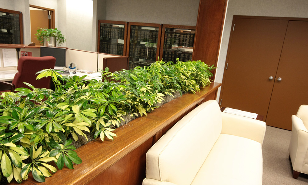 office indoor plants. Office Indoor Plants E