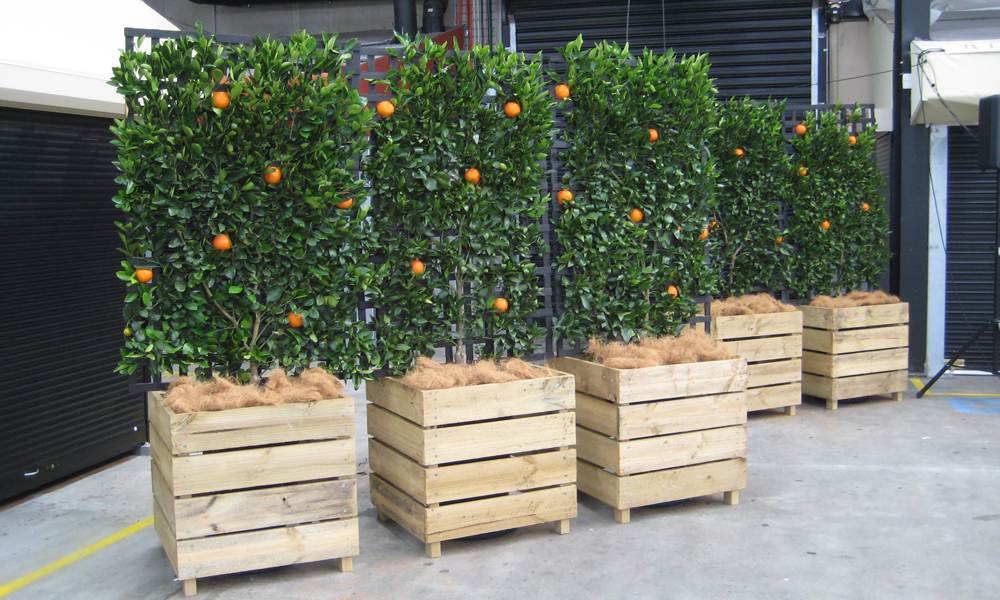Get Well-maintained Indoor Plants at Plant Hire Melbourne