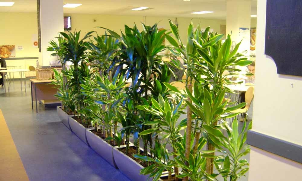 try lively indoor plants for home decor instead of plastic
