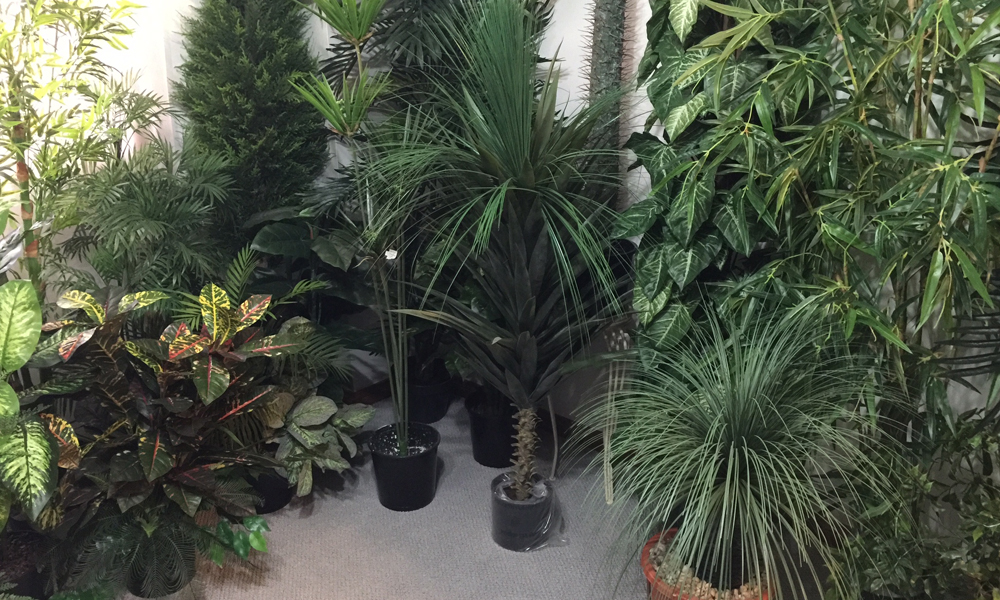 Get The Plants For Indoors To Improve And Transform Your Places