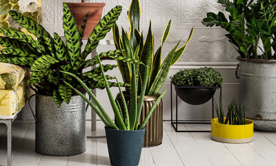 indoor-Plant-hire-in-Melbourne