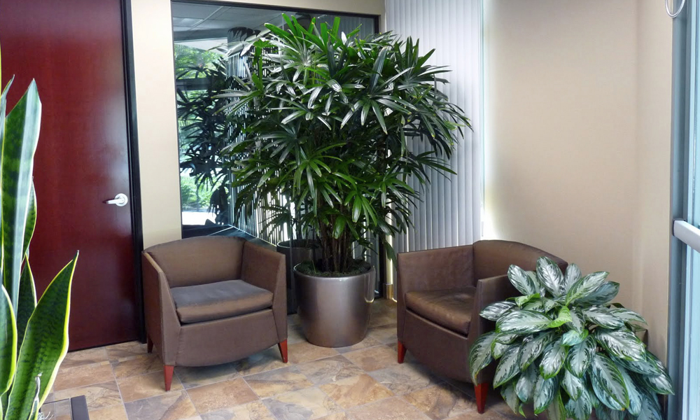 Different Types Of Amazing Office Plants