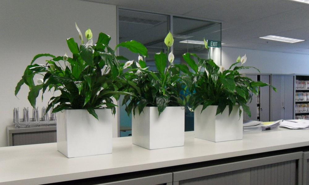 How To Maintain Your Indoor Plants?