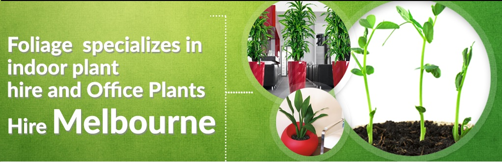 Importance of Indoor Plants Hire in Melbourne