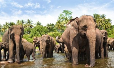 asia-sri-lanka-yala-elephants-2