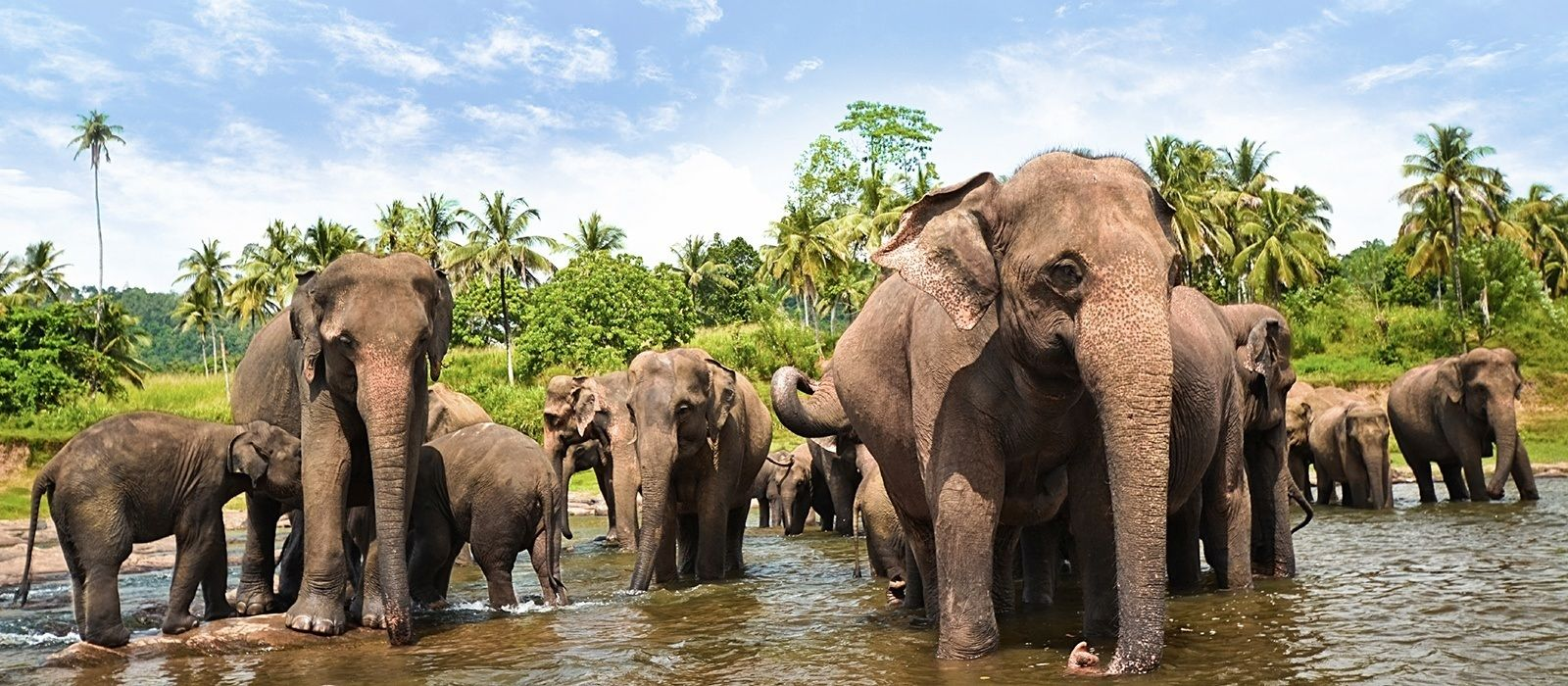 Wildlife Experiences in Sri Lanka That Should Not Be Missed