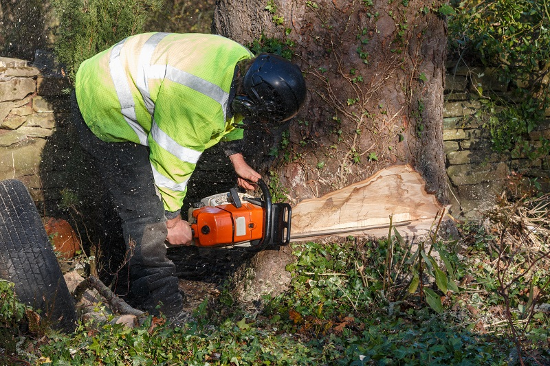 Tree Removal Services Provider
