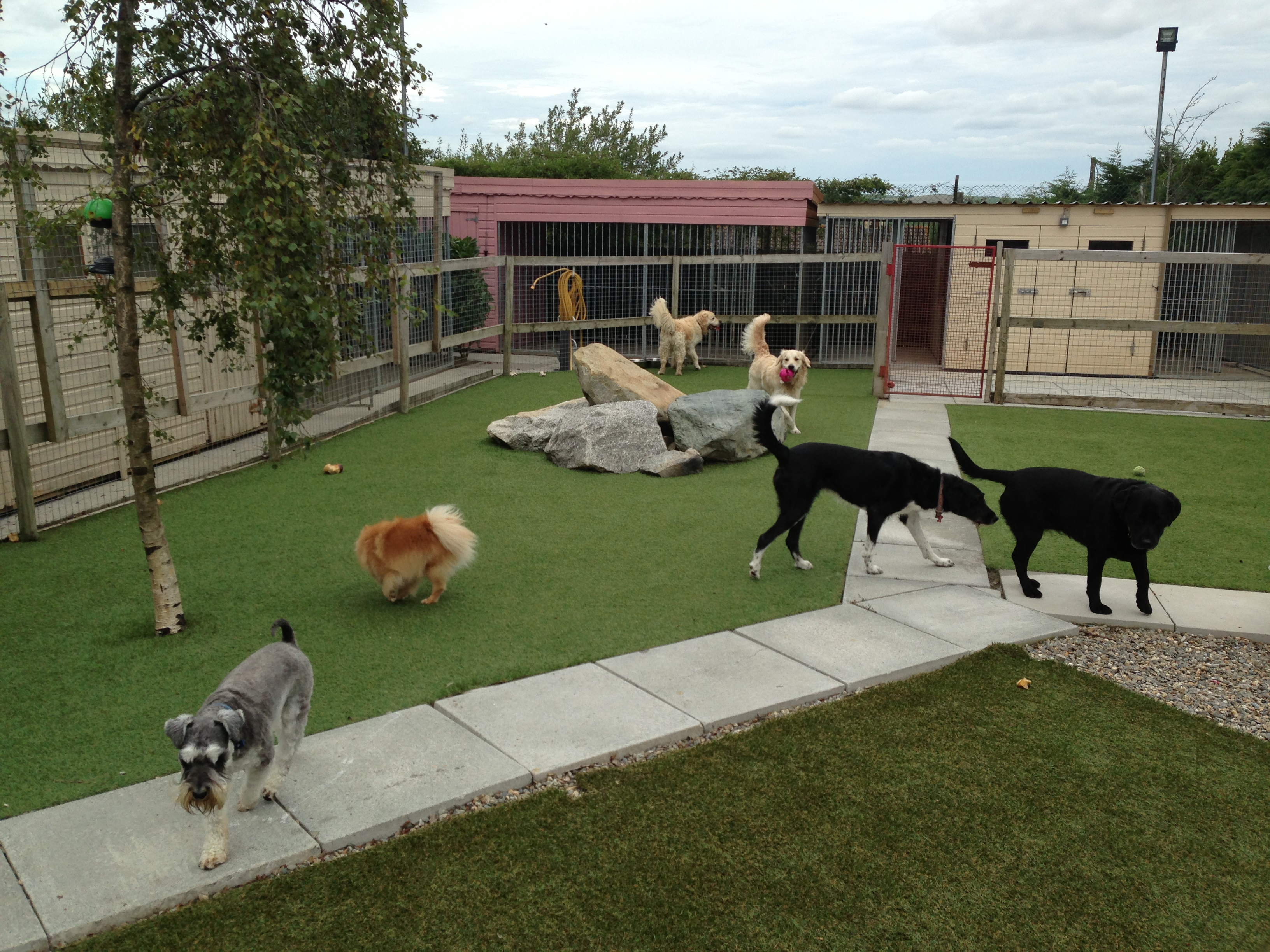 How to select the best pet boarding facilities liveblog spot for Boarding facility for dogs