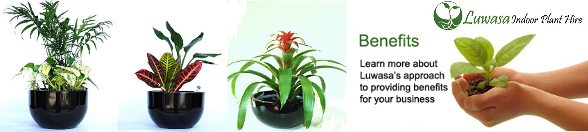 Indoor Plant Hire: for Better Production and Stress-Free Environment