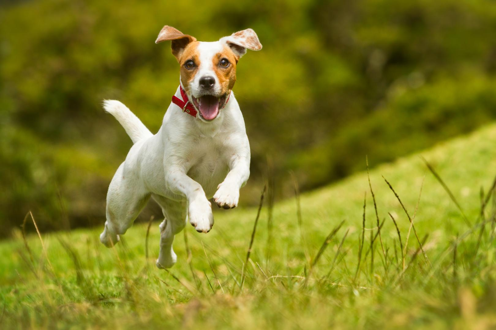 5 Questions for Choosing a Dog Boarding Kennels