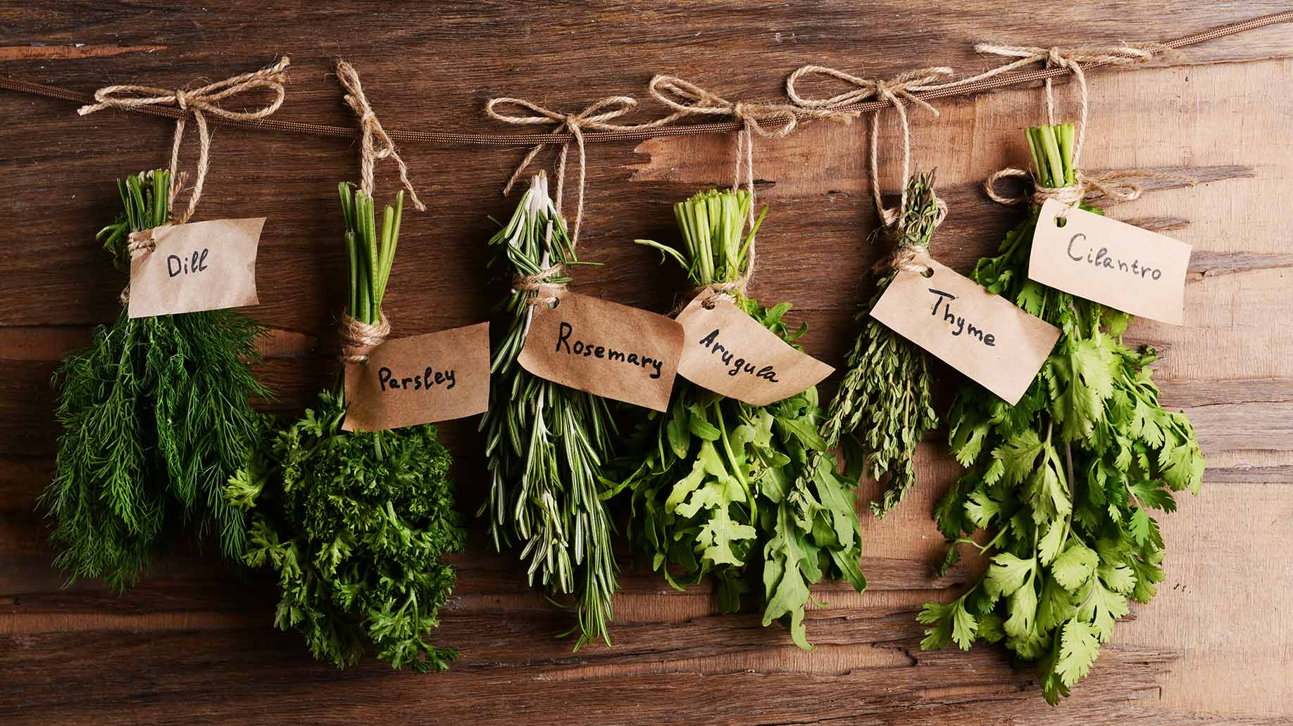 Powerful Plants: Medicinal Plants For Your Home or Garden - LIVE ...