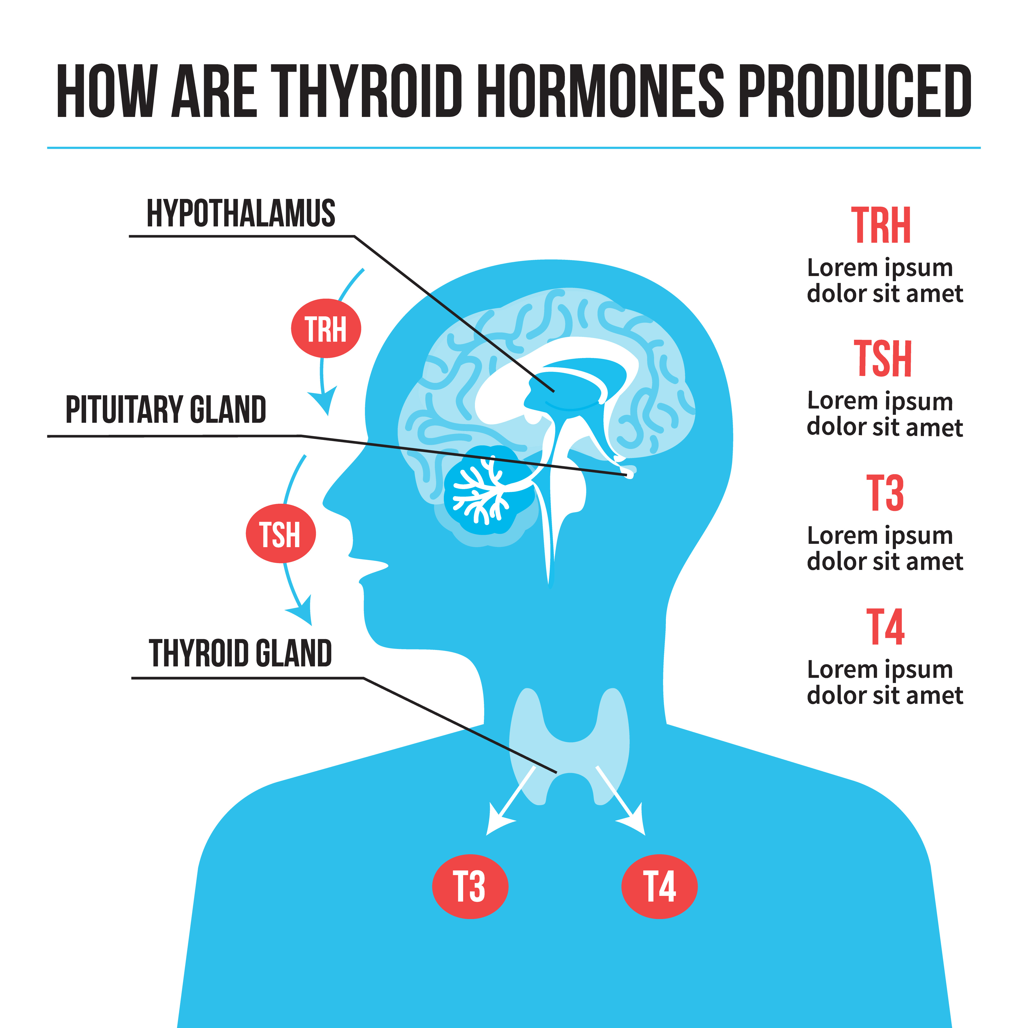 Can Thyroid Ruin Your Brain S Efficiency Live Blog Spot