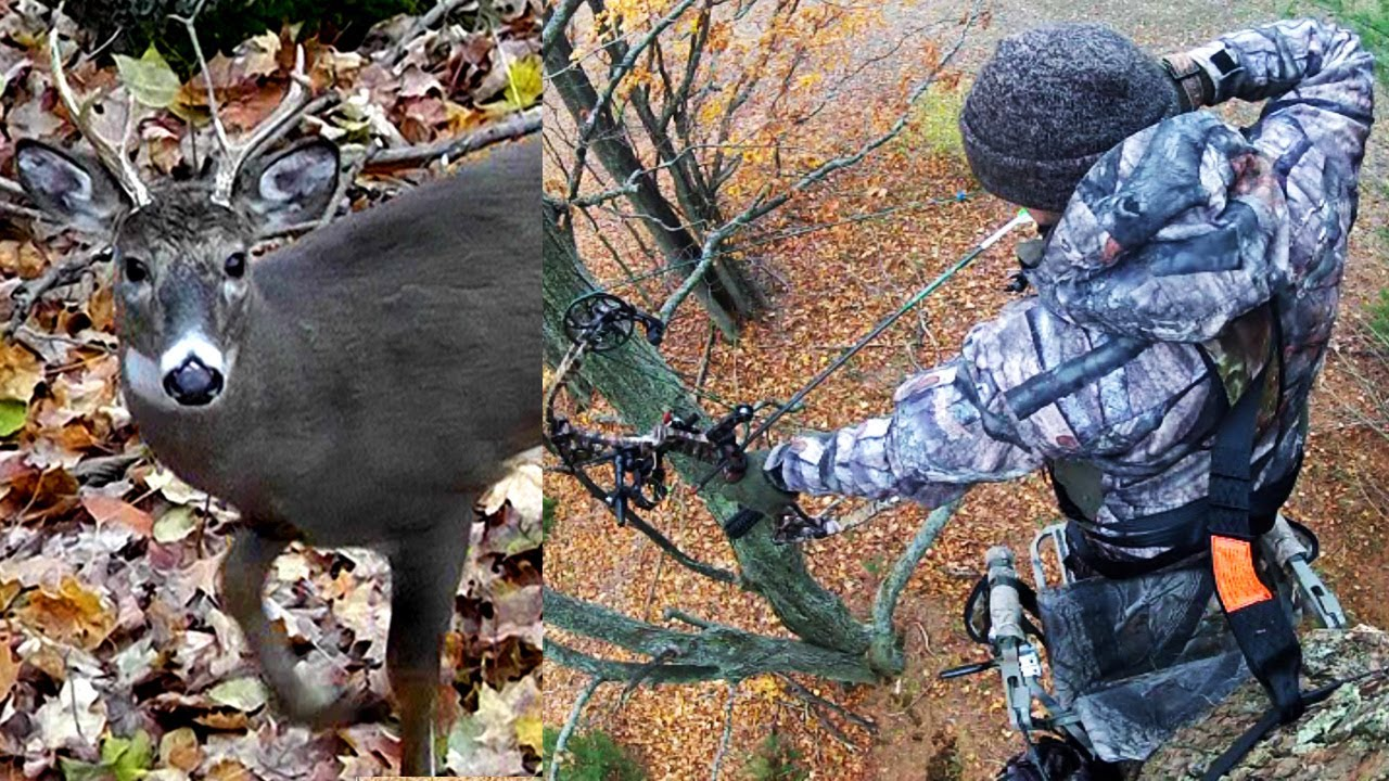 How to Bow Hunting For Whitetails Deer?