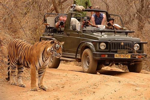 Why You Should Get A Luxury Safari of Ranthambore