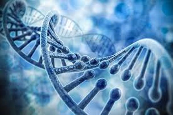 Implications of mutation in the MTHFR gene during pregnancy