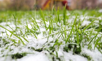 Early Winter Lawn Care