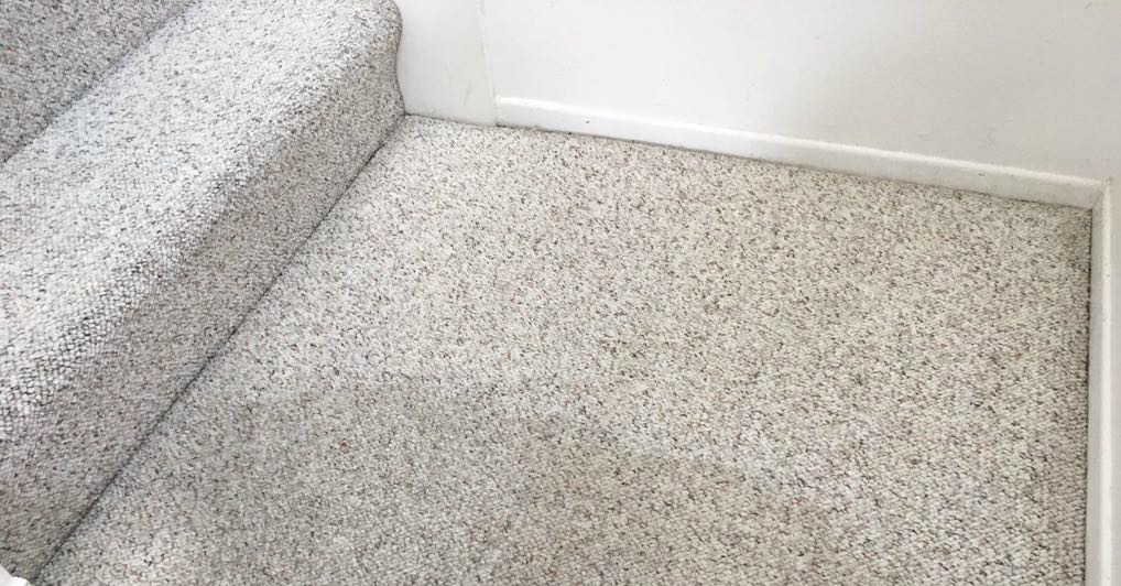 Hire a Reputable Carpet Cleaner