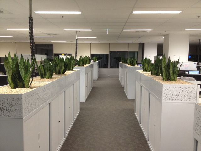 Benefits Of Indoor Plants Maintenance That May Change Your Perspective