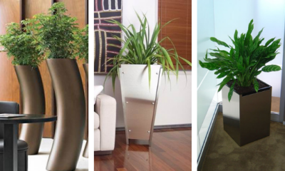 Office Plants for hire