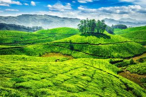 Munnar, Fist Best Place to Travel Alone in South India