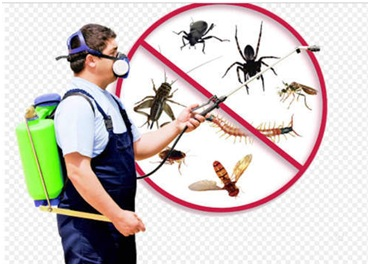 Let's Know Why Pest Controlling Services is Significant