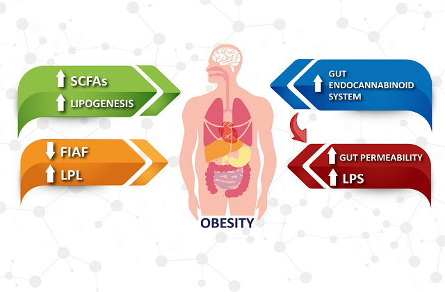 obesity and restlessness due to bad sleeping habits