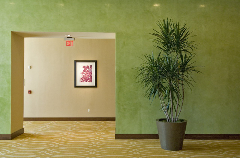Interior Plant Maintenance In Your Home or Business