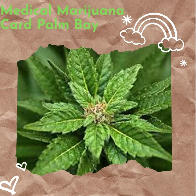 How can you Effectively use Medical Marijuana Card palm bay