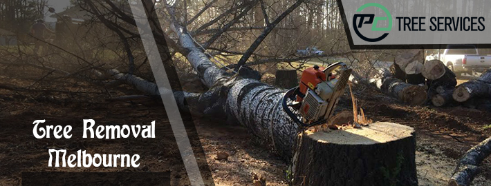 The Right Time You Should Contact Tree Trimming Service Provider Company