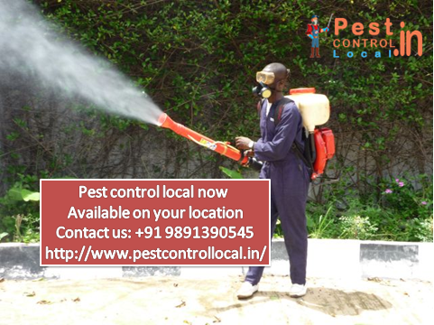 We Explain Some Methods for Remove Pest from Your Home