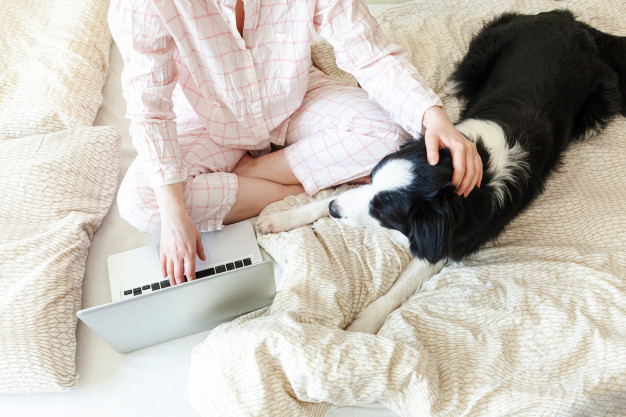 Pet Sitting Software: Start Your Own Pet Sitting Business