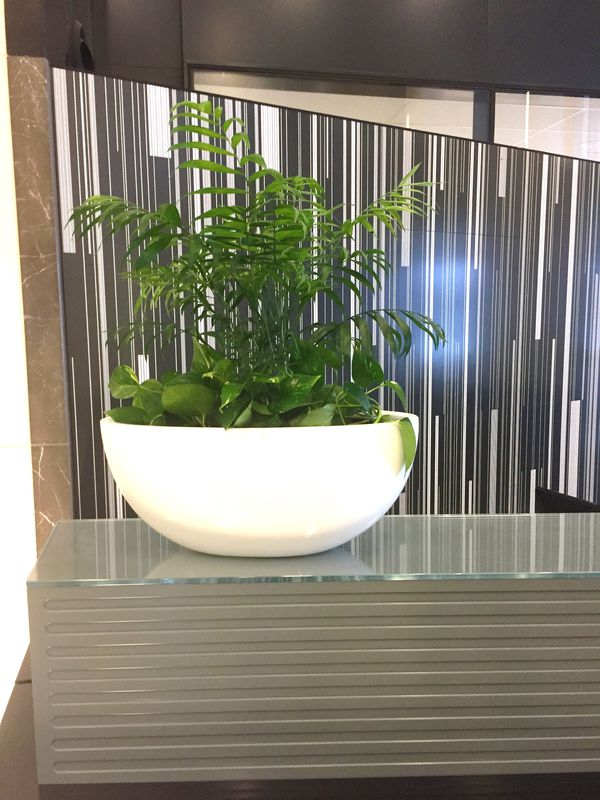 How Effective does the Office Plants are?