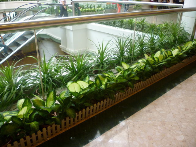 Check Why Experts Say That It Is Important to Go For Plants For Hire