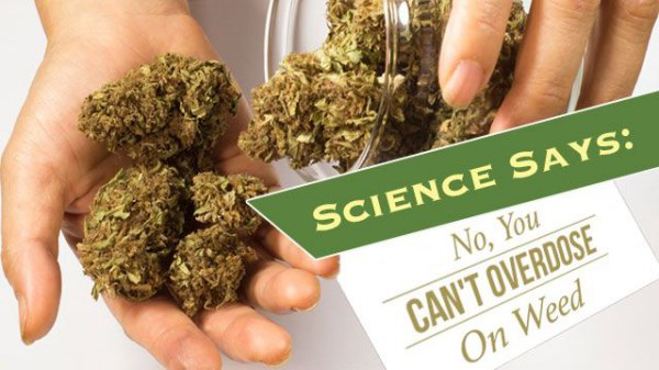 More and More American's Are Using Medical Marijuana